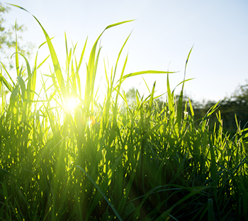 Light in the Grass | Crescent Beach Counselling | Surrey, BC Counselling | White Rock